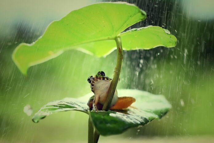 Żaba, natura, przyroda, ekologia